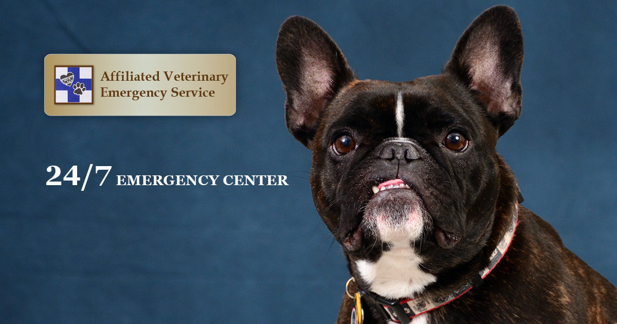 Affiliated Veterinary Emergency Service | Animal Hospital in