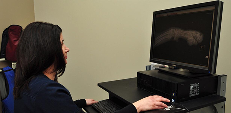 Digital Veterinary Radiology in Allen Park MI