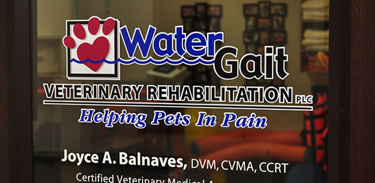 Water Gait Veterinary Rehabilitation