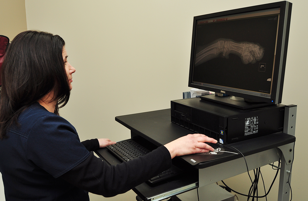 Digital Radiology Services at Affiliated Veterinary Emergency Service