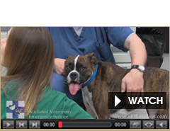 Affiliated Veterinary Emergency Service Videos